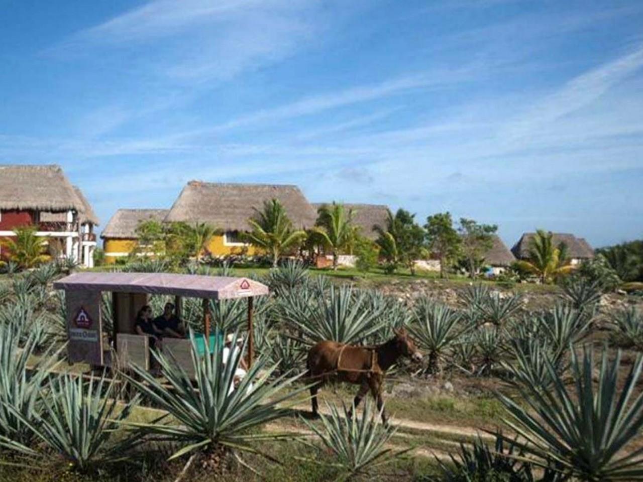 Hacienda Sotuta de Peon