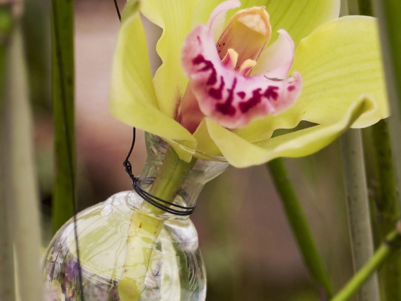 RHS Tatton Park Flower Show 2019