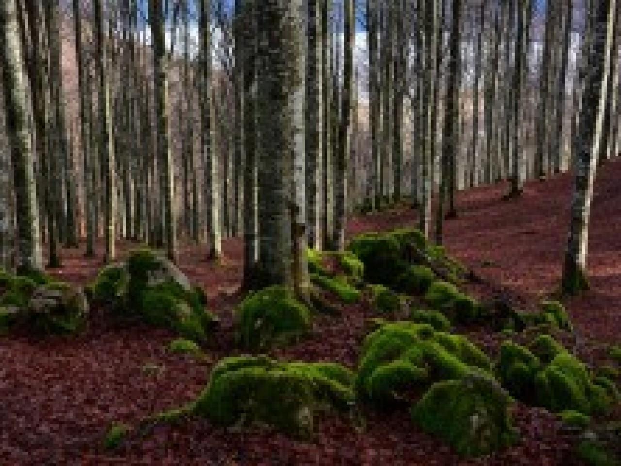 カンシリオの森ハイキング