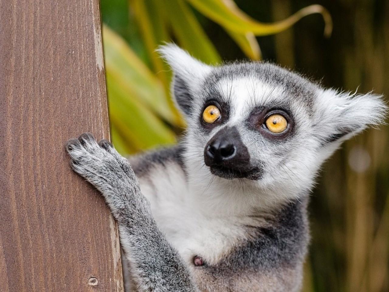 IN VIAGGIO CON ENZA: MADAGASCAR