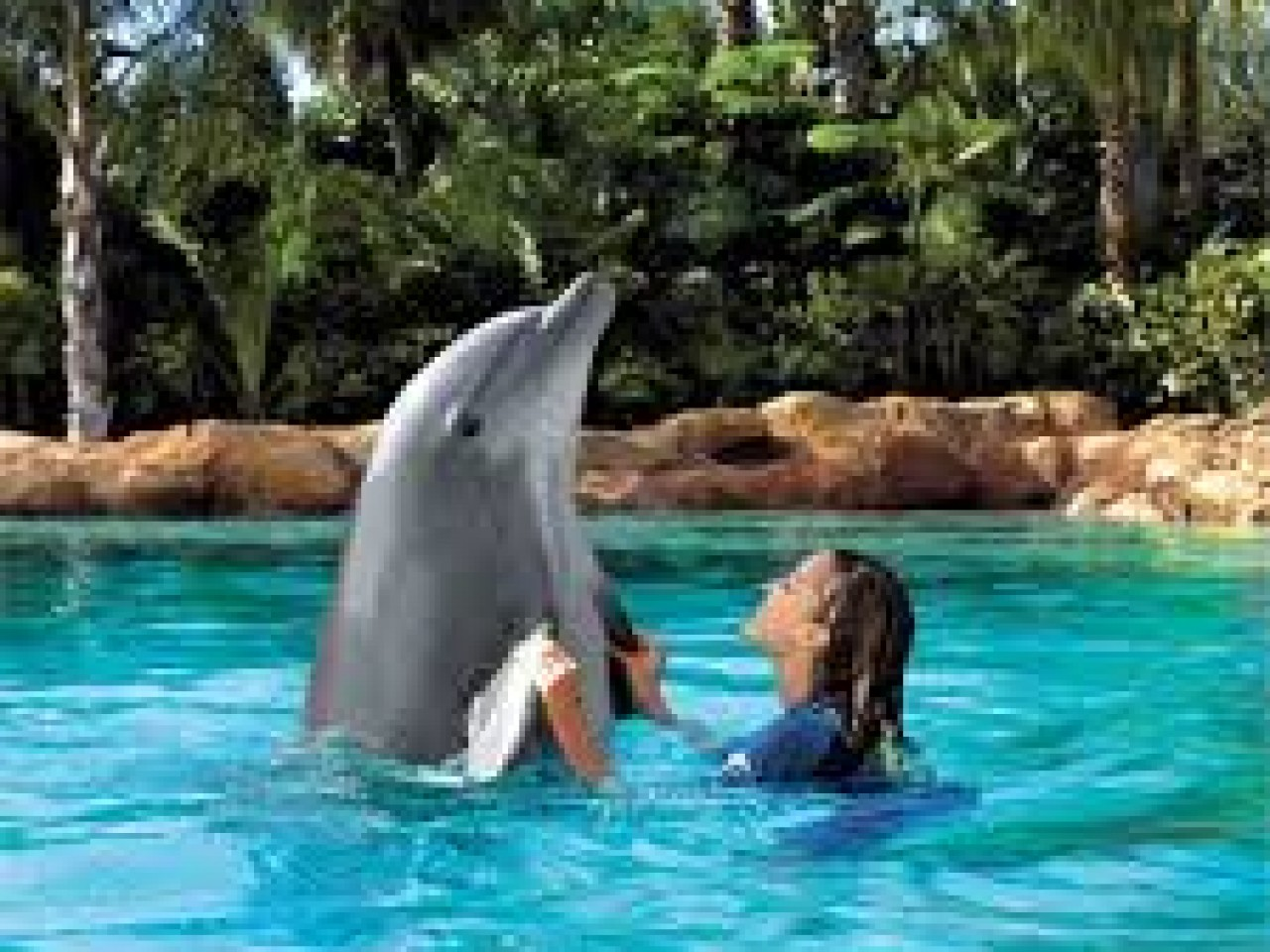 Seaworld Parks & Entertainment®